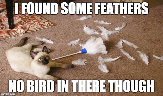 I FOUND SOME FEATHERS NO BIRD IN THERE THOUGH | made w/ Imgflip meme maker