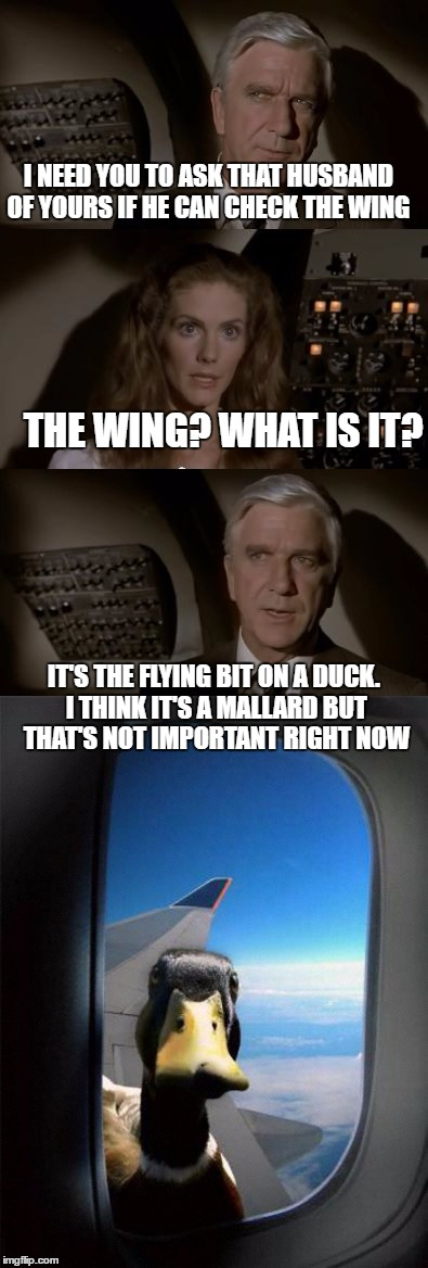 Airplane wing check | I NEED YOU TO ASK THAT HUSBAND OF YOURS IF HE CAN CHECK THE WING THE WING? WHAT IS IT? IT'S THE FLYING BIT ON A DUCK. I THINK IT'S A MALLARD | image tagged in airplane what is it,airplane,duck | made w/ Imgflip meme maker