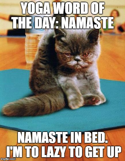 yoga cat |  YOGA WORD OF THE DAY: NAMASTE; NAMASTE IN BED. I'M TO LAZY TO GET UP | image tagged in yoga cat | made w/ Imgflip meme maker