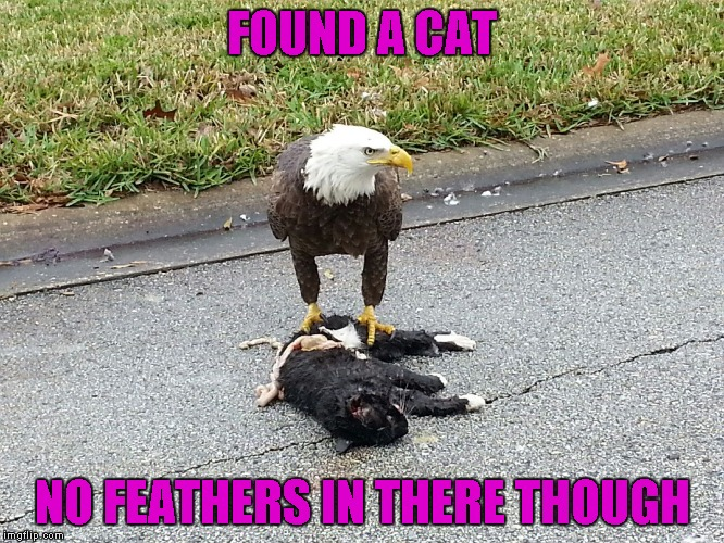 FOUND A CAT NO FEATHERS IN THERE THOUGH | made w/ Imgflip meme maker