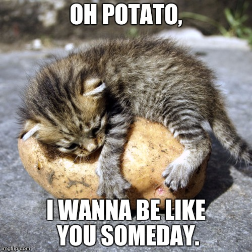 Your classic kitty meme. Produced by your favorite nacho material. All rights reserved. | OH POTATO, I WANNA BE LIKE YOU SOMEDAY. | image tagged in memes,cat,potato,potato cat,cute,funny memes | made w/ Imgflip meme maker