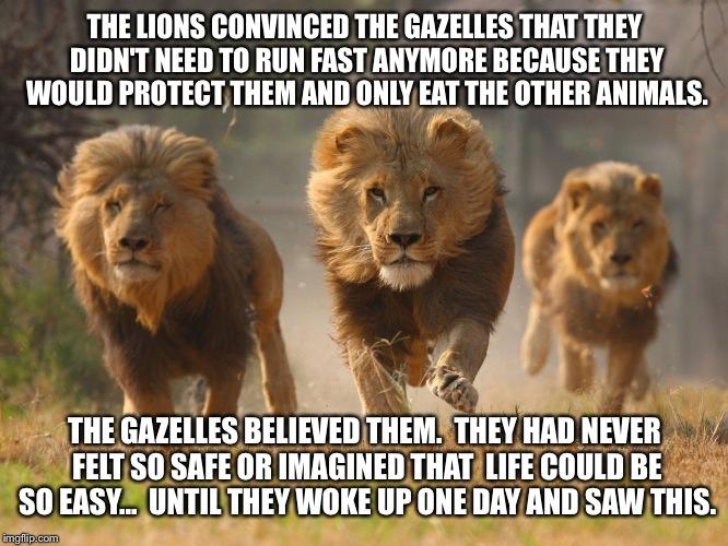 170kh7 lions imgflip,Lions Meme