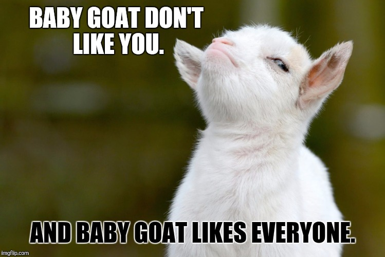BABY GOAT DON'T LIKE YOU. AND BABY GOAT LIKES EVERYONE. | image tagged in proud baby goat | made w/ Imgflip meme maker