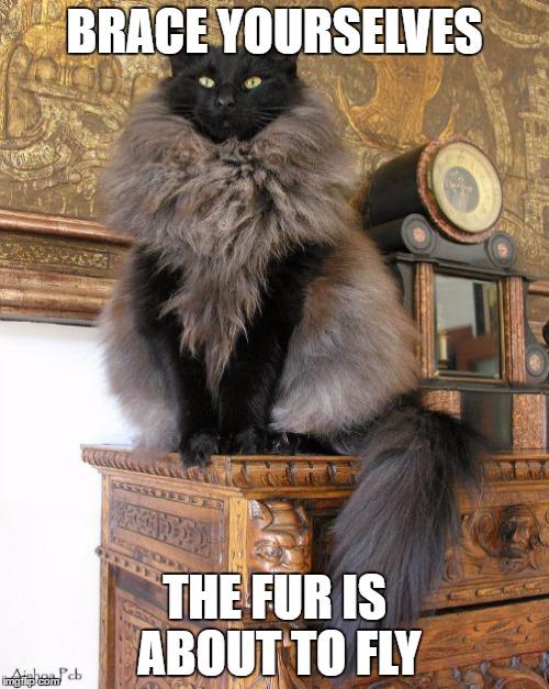 tabby cat m