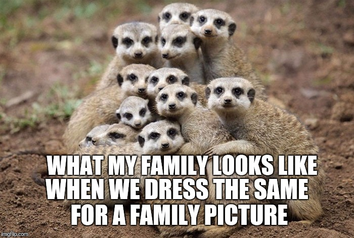 Animals Hugging | WHAT MY FAMILY LOOKS LIKE WHEN WE DRESS THE SAME FOR A FAMILY PICTURE | image tagged in animals hugging,family photo | made w/ Imgflip meme maker