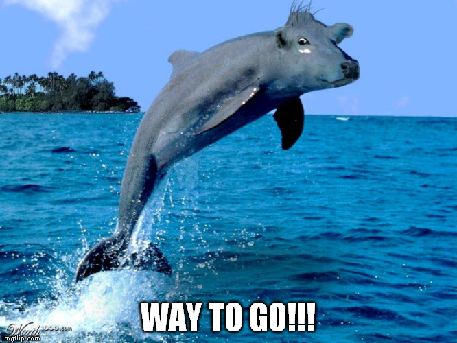 seacow | WAY TO GO!!! | image tagged in seacow | made w/ Imgflip meme maker