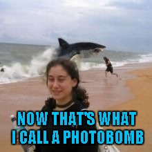 Just another day at Shark Beach. | NOW THAT'S WHAT I CALL A PHOTOBOMB | image tagged in shark photobomb,memes,funny,funny animals,funny sharks,animals | made w/ Imgflip meme maker