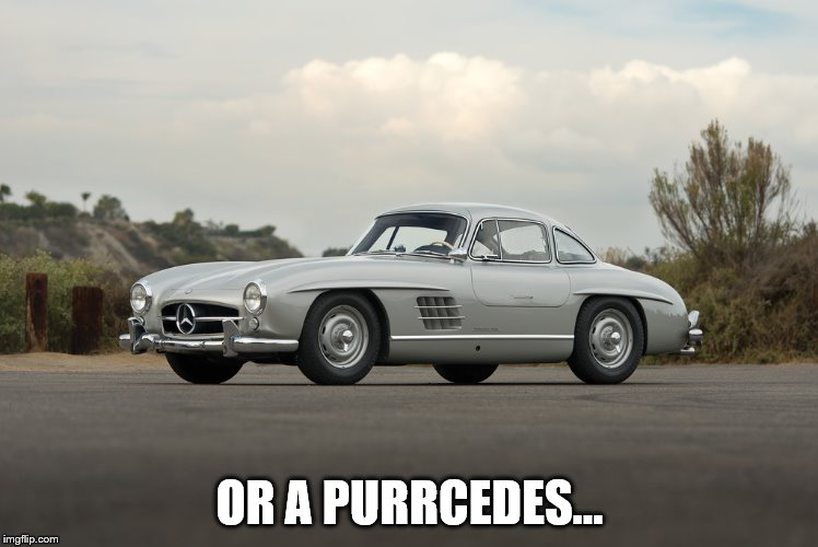 OR A PURRCEDES... | made w/ Imgflip meme maker
