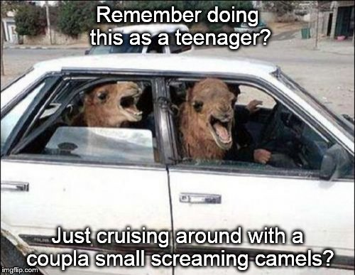 Quit Hatin | Remember doing this as a teenager? Just cruising around with a coupla small screaming camels? | image tagged in memes,quit hatin | made w/ Imgflip meme maker