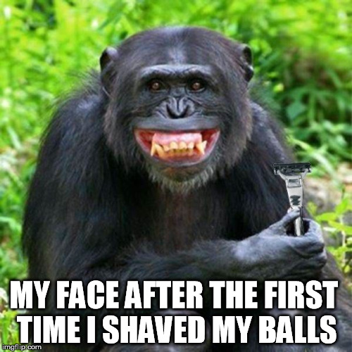 monkey | MY FACE AFTER THE FIRST TIME I SHAVED MY BALLS | image tagged in monkey,shave,shaved,balls,monkey business,testicles | made w/ Imgflip meme maker