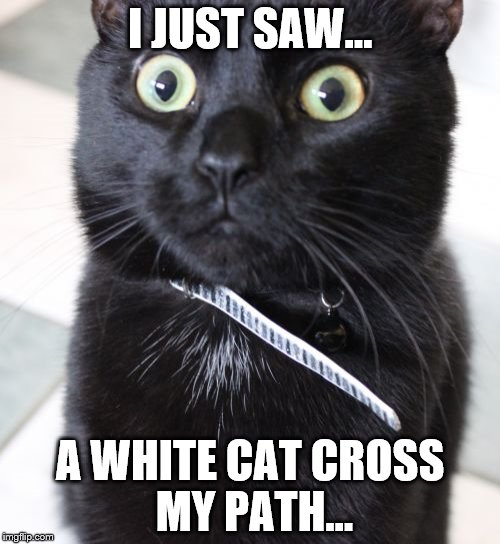 Woah Kitty | I JUST SAW... A WHITE CAT CROSS MY PATH... | image tagged in memes,woah kitty | made w/ Imgflip meme maker