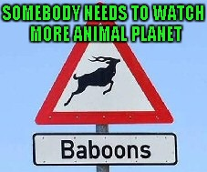 Seriously...I'm pretty sure even a five year old knows that's not a baboon. | SOMEBODY NEEDS TO WATCH MORE ANIMAL PLANET | image tagged in baboons,memes,funny signs,funny,funny animals,you had one job | made w/ Imgflip meme maker