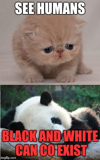 Cute animals | SEE HUMANS BLACK AND WHITE CAN CO EXIST | image tagged in cute animals | made w/ Imgflip meme maker