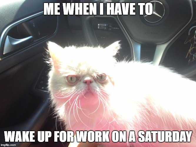 waking up for wotk |  ME WHEN I HAVE TO; WAKE UP FOR WORK ON A SATURDAY | image tagged in cats,wokr,funny memes | made w/ Imgflip meme maker