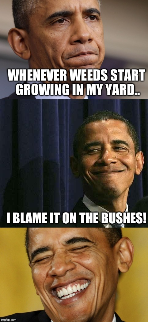 WHENEVER WEEDS START GROWING IN MY YARD.. I BLAME IT ON THE BUSHES! | made w/ Imgflip meme maker