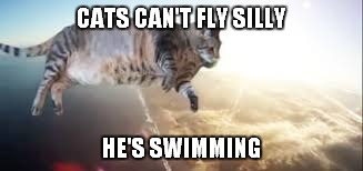 CATS CAN'T FLY SILLY HE'S SWIMMING | made w/ Imgflip meme maker