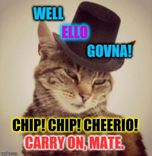 british cat.  |  WELL; ELLO; GOVNA! CHIP! CHIP! CHEERIO! CARRY ON, MATE. | image tagged in funny,cats,memes,england,fancy pants | made w/ Imgflip meme maker