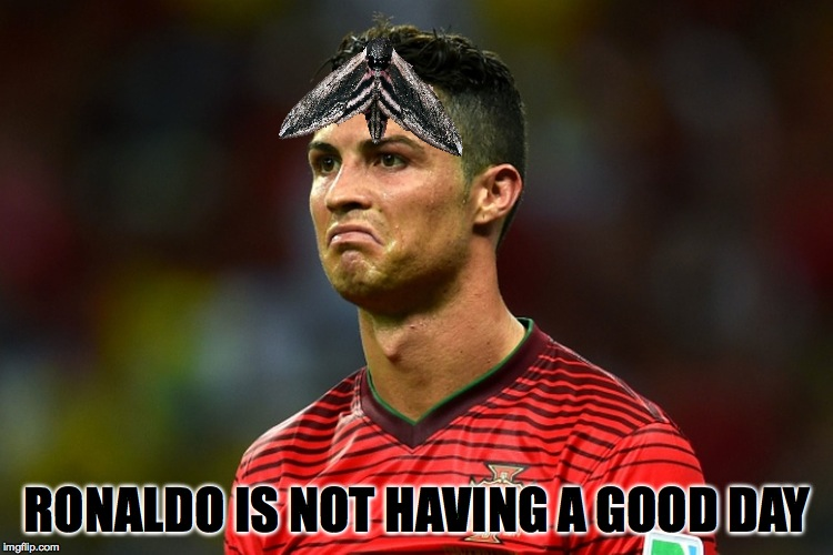 Did anyone else see the moth that landed on his head in todays game against France?  | RONALDO IS NOT HAVING A GOOD DAY | image tagged in memes,soccer,cristiano ronaldo,euro 2016,lol | made w/ Imgflip meme maker