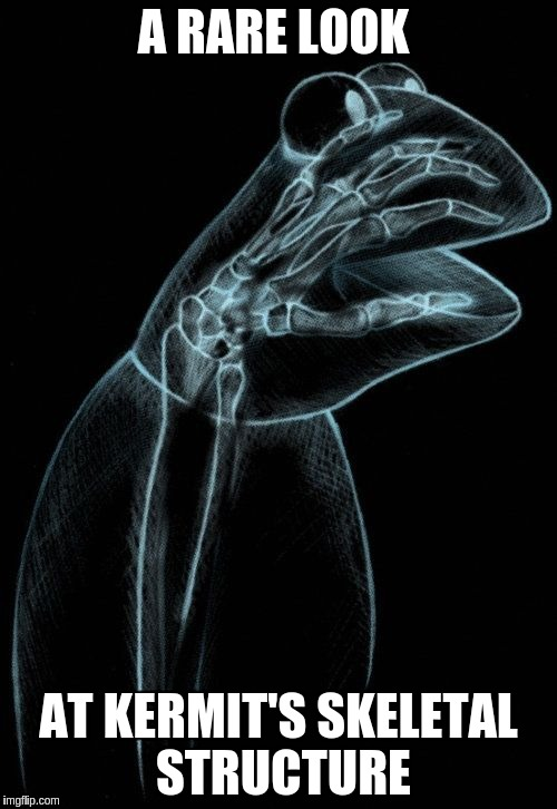 Kermit X-Ray | A RARE LOOK AT KERMIT'S SKELETAL STRUCTURE | image tagged in kermit xray,memes | made w/ Imgflip meme maker