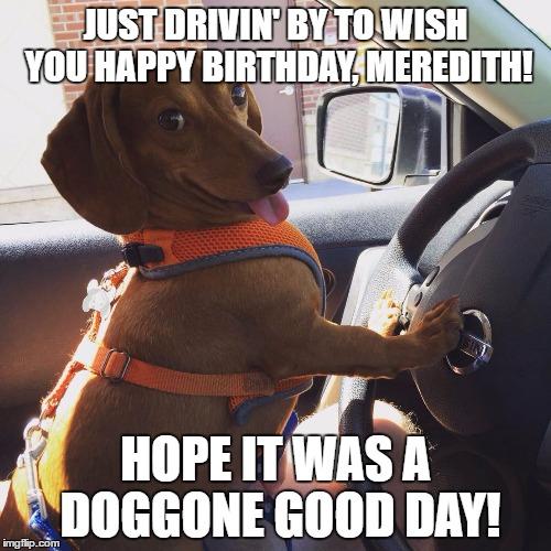 Wiener Dog In Car Imgflip