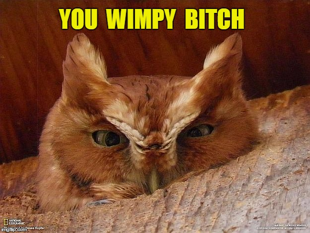 YOU  WIMPY  B**CH | image tagged in angry owl | made w/ Imgflip meme maker