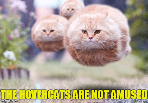 THE HOVERCATS ARE NOT AMUSED | made w/ Imgflip meme maker