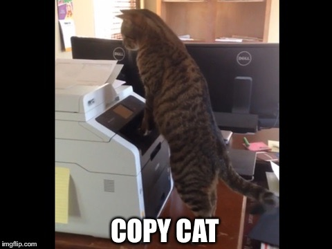 COPY CAT | made w/ Imgflip meme maker