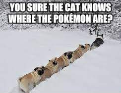 YOU SURE THE CAT KNOWS WHERE THE POKÉMON ARE? | made w/ Imgflip meme maker