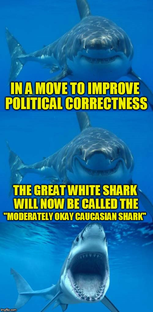 Bad Shark Pun  | IN A MOVE TO IMPROVE POLITICAL CORRECTNESS THE GREAT WHITE SHARK WILL NOW BE CALLED THE ''MODERATELY OKAY CAUCASIAN SHARK'' | image tagged in bad shark pun,funny meme,political correctness,joke,sharks,laugh | made w/ Imgflip meme maker