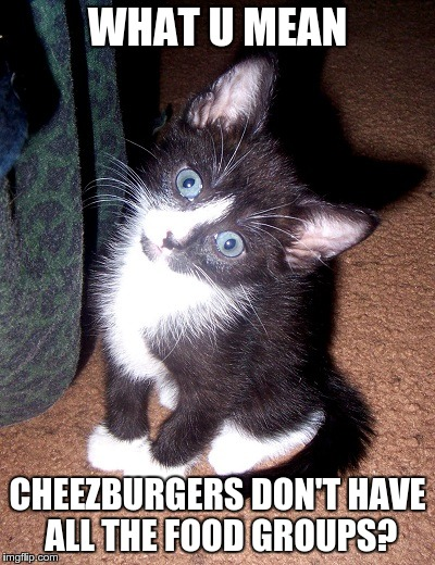 Confused kitten is confused - Imgflip