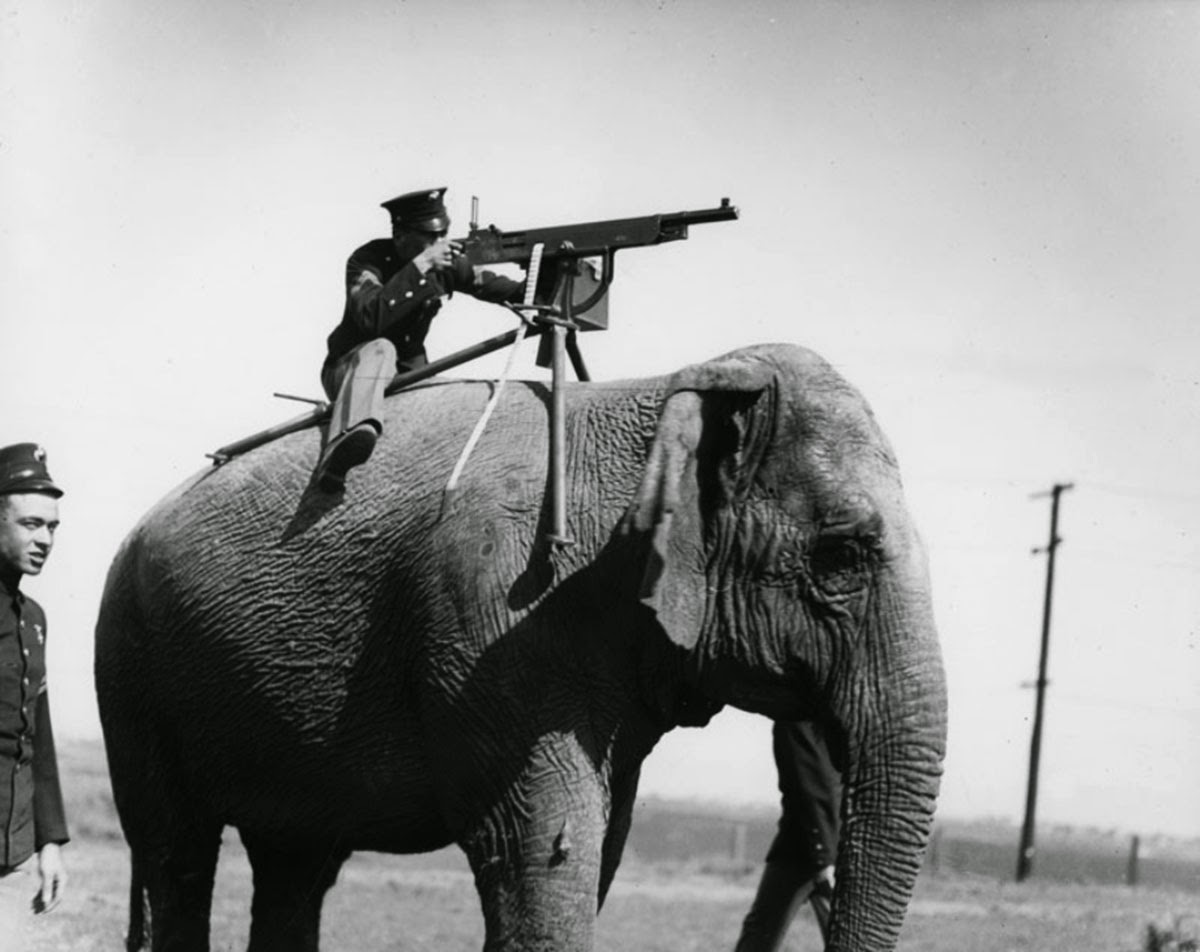 shooting an elephant mask of impeirialism Considering on the elephant s destiny, orwell shows another side of imperialism that is rather defective and strays from it s ideals he wears a mask, and his face grows to suit it from george orwell s essay shooting an elephant, it is easy to see merely how blemished imperialistic.