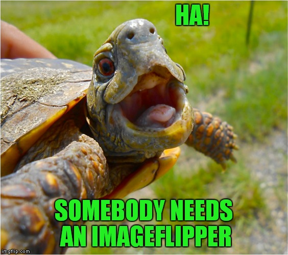 HA! SOMEBODY NEEDS AN IMAGEFLIPPER | made w/ Imgflip meme maker