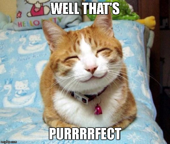 Funny Thank You Cat Memes : When you make a good meme imgflip