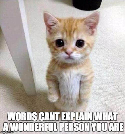 cat profile picture