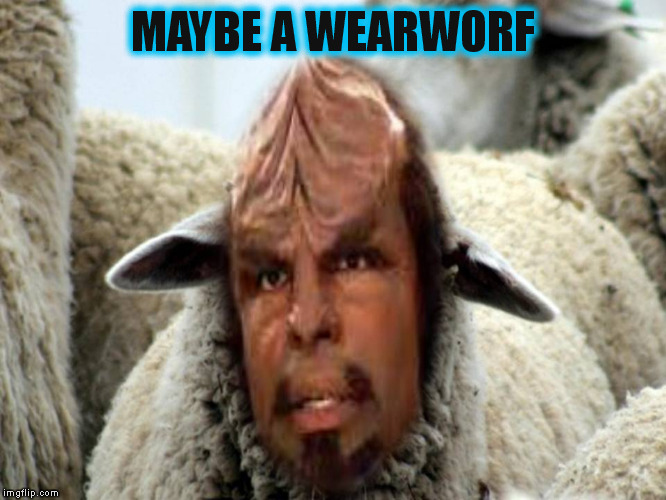 MAYBE A WEARWORF | made w/ Imgflip meme maker