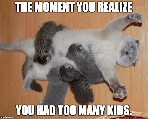 too many kids |  THE MOMENT YOU REALIZE; YOU HAD TOO MANY KIDS. | image tagged in cats | made w/ Imgflip meme maker
