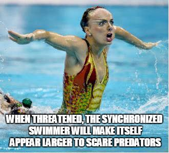 Look at my wingspan! | WHEN THREATENED, THE SYNCHRONIZED SWIMMER WILL MAKE ITSELF APPEAR LARGER TO SCARE PREDATORS | image tagged in synchronized swimming | made w/ Imgflip meme maker