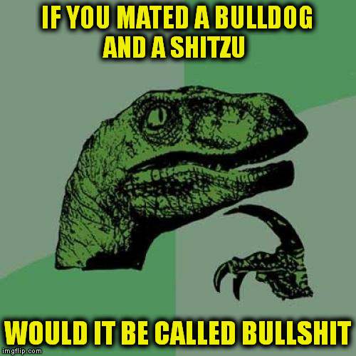 Philosoraptor Meme | IF YOU MATED A BULLDOG WOULD IT BE CALLED BULLSHIT AND A SHITZU | image tagged in memes,philosoraptor | made w/ Imgflip meme maker
