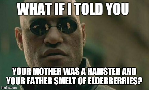 Matrix Morpheus Meme | WHAT IF I TOLD YOU YOUR MOTHER WAS A HAMSTER AND YOUR FATHER SMELT OF ELDERBERRIES? | image tagged in memes,matrix morpheus | made w/ Imgflip meme maker