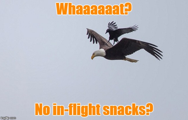 Whaaaaaat? No in-flight snacks? | made w/ Imgflip meme maker