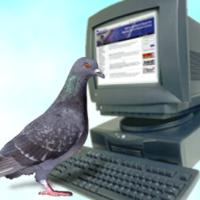 pigeon on a computer  Meme Template