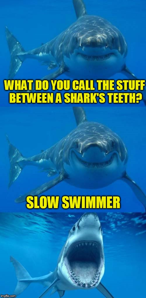 Bad Shark Pun  | WHAT DO YOU CALL THE STUFF BETWEEN A SHARK'S TEETH? SLOW SWIMMER | image tagged in bad shark pun | made w/ Imgflip meme maker