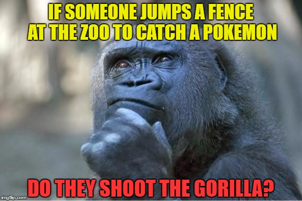 The thinking gorilla | IF SOMEONE JUMPS A FENCE AT THE ZOO TO CATCH A POKEMON DO THEY SHOOT THE GORILLA? | image tagged in the thinking gorilla,memes,pokemon,pokemon go,catch all the pokemon,shoot the gorilla | made w/ Imgflip meme maker