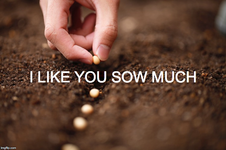 There's something about an elemental man... | I LIKE YOU SOW MUCH | image tagged in janey mack meme,sow,i like you sow much,farming,farmer | made w/ Imgflip meme maker