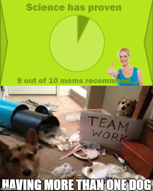 At least one of those ten moms is normal I guess | HAVING MORE THAN ONE DOG | image tagged in 9 out of 10 moms recommend,team work,dog,more,mess | made w/ Imgflip meme maker