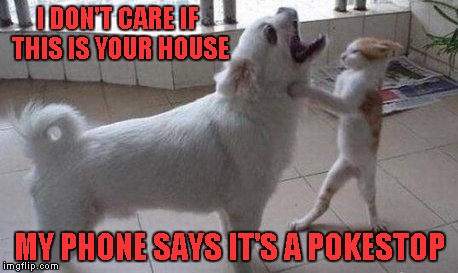 Those Pokemon Go players don't care where they go...One in my town just got hit by a car. Pay attention to reality morons. | I DON'T CARE IF THIS IS YOUR HOUSE MY PHONE SAYS IT'S A POKESTOP | image tagged in pokemon go,memes,funny,animals,dog vs cat,pokemon | made w/ Imgflip meme maker