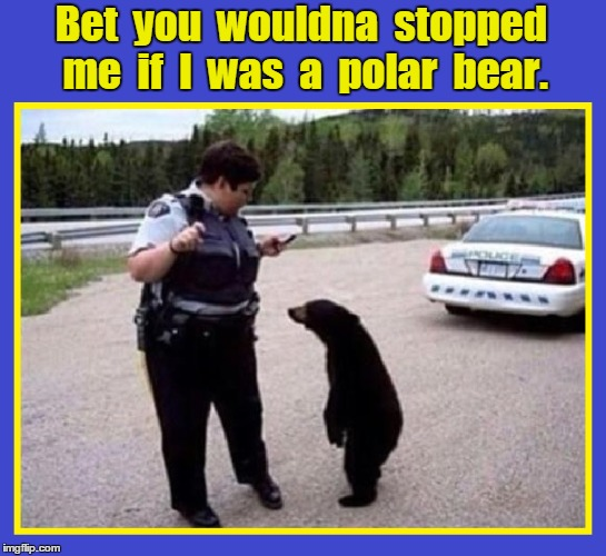 Black Bear Stopped by Racist Cop | Bet  you  wouldna  stopped me  if  I  was  a  polar  bear. | image tagged in black lives matter,black bears,vince vance,traffic stop,discrimination,blue lives matter | made w/ Imgflip meme maker