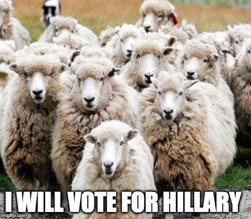 Hillary Supporters | I WILL VOTE FOR HILLARY | image tagged in hillary clinton,trump,democrat,sheep,vote | made w/ Imgflip meme maker