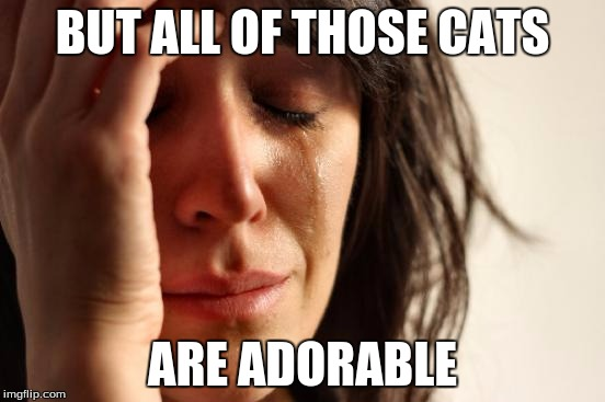 First World Problems Meme | BUT ALL OF THOSE CATS ARE ADORABLE | image tagged in memes,first world problems | made w/ Imgflip meme maker