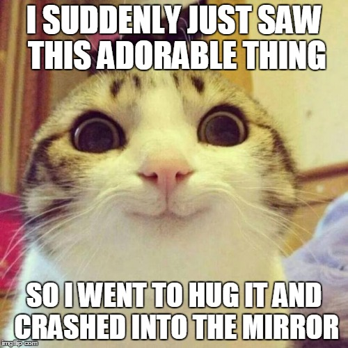 Smiling Cat Meme | I SUDDENLY JUST SAW THIS ADORABLE THING SO I WENT TO HUG IT AND CRASHED INTO THE MIRROR | image tagged in memes,smiling cat | made w/ Imgflip meme maker
